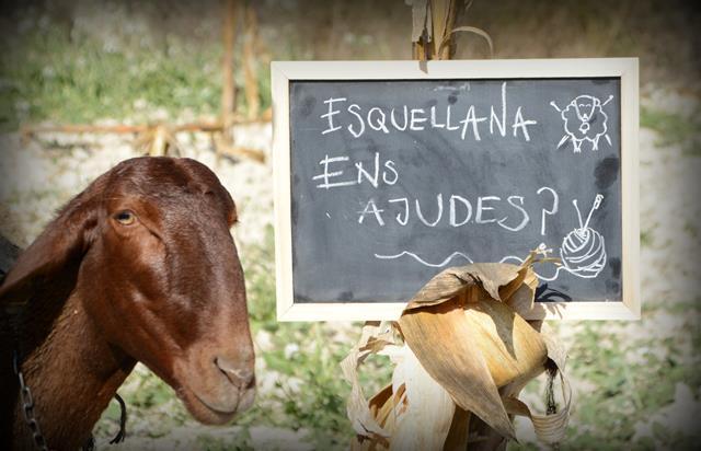 Esquellana-Lana-Guirra5